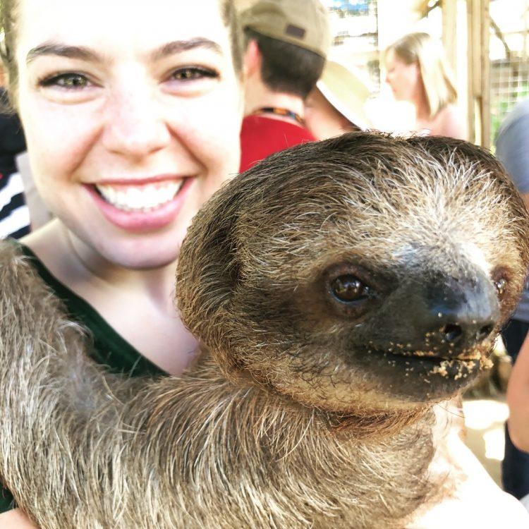 Sloth in Roatán Honduras