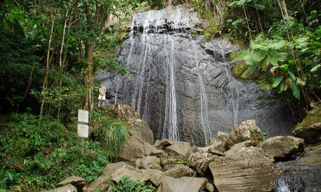 Things To Do in El Yunque National Forest