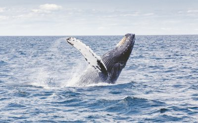 The Couple's Quick Guide to Whale Watching in Australia
