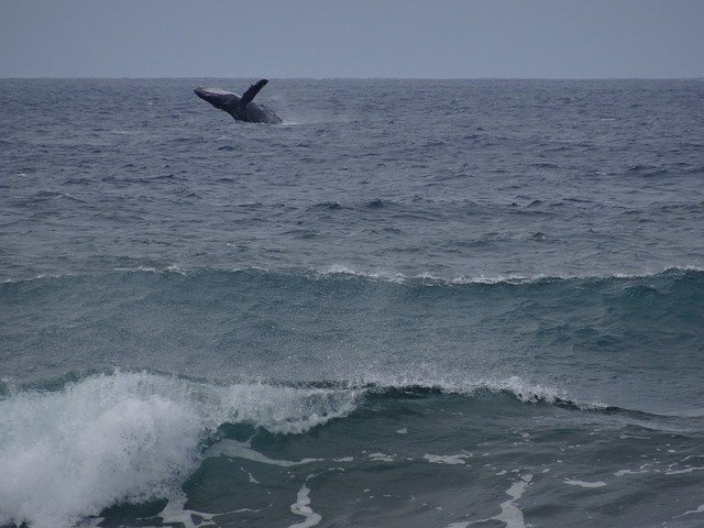 Whale spotted in Maui