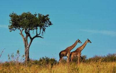 How to Spend Your Honeymoon in Tanzania, Africa
