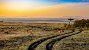 african antelopes