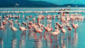 pink flamingos in africa